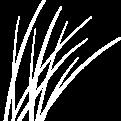 Duenengras_weiß