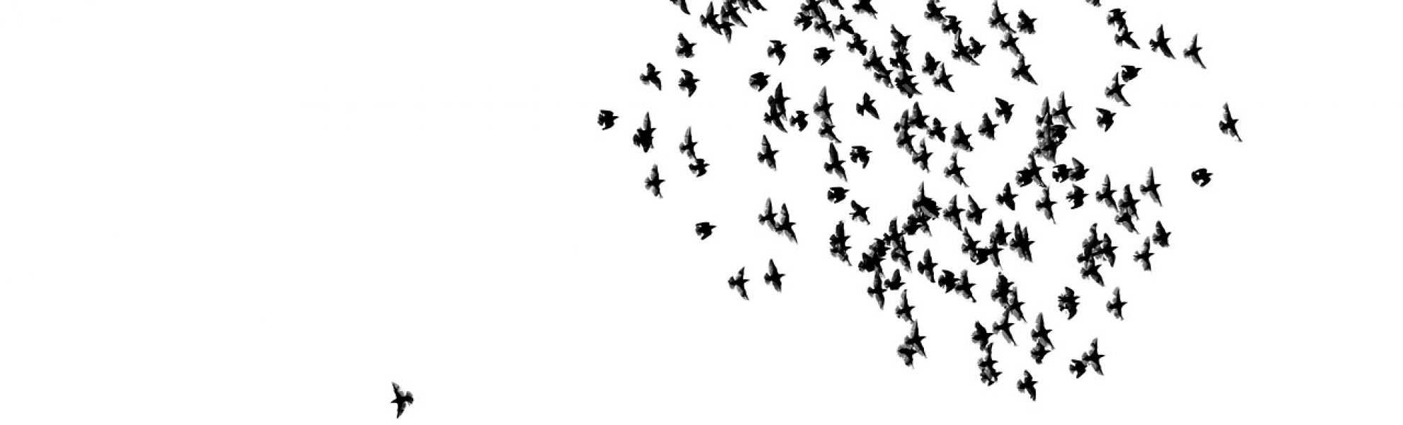 birds-2189476_1280